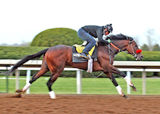 Nyquist Works at Keeneland 2016