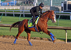 Justify Gallops in 2018